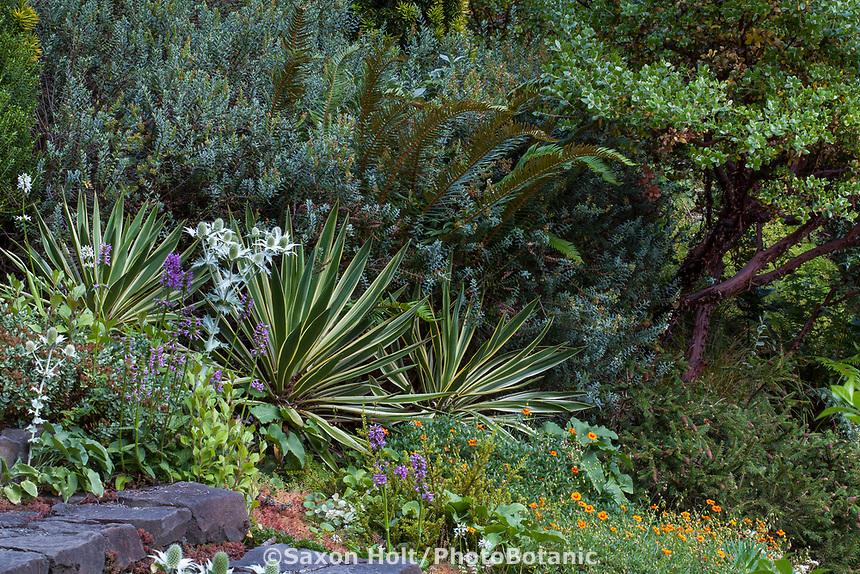 The Dry Bank with Yucca, variegated succulent in Elisabeth Miller Botanical Garden