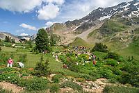 France, Hautes-Alpes (05), Villar-d'Arène, col du Lautaret, Jardin alpin du Lautaret à 2100 m d'altitude : vue générale en juillet avec des visiteurs
