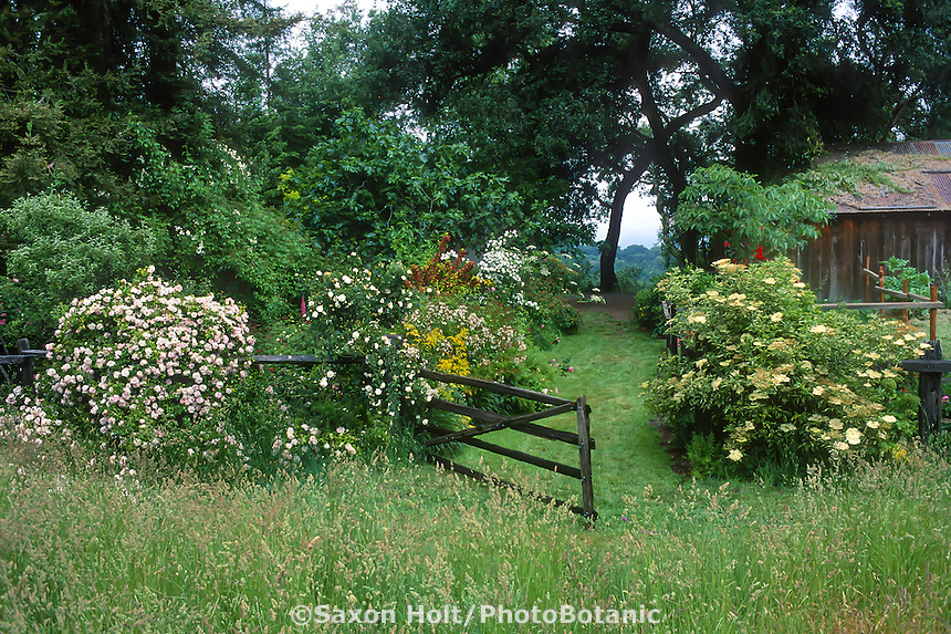 Grass path entry from orchard grass meadow into California country garden through fence gate covered with roses; Michael Bates design