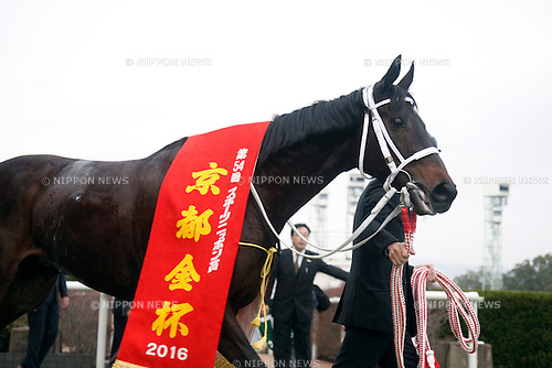 Win Primera,<br /> JANUARY 5, 2016 - Horse Racing :<br /> Win Primera after winning the Sports Nippon Sho Kyoto Kimpai at Kyoto Racecourse in Kyoto, Japan. (Photo by Eiichi Yamane/AFLO)