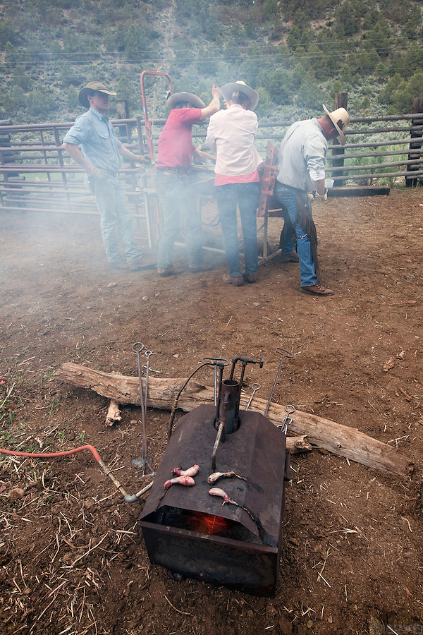 Testicles roast on the burner used to heat the branding irons. So called Rocky Mountain Oysters are used to sustain a working cowboy through the long process of branding and castrating calves.<br /> <br /> In late May, the calves are branded and vaccinated on Bill Fales' ranch. Fales, owner of Cold Mountain Ranch in Carbondale, Colorado, has been ranching his sliver of land in the Roaring Fork Valley since 1973.  <br /> <br /> Development, oil and gas extraction, and mechanized recreation all threaten the valley--and his livelihood. Not surprisingly, Fales is a proponent of conservation, having placed his property in a land trust in perpetuity. He is also in favor of the expansion of wilderness designation within his and adjoining counties. <br /> <br /> Ranching in Colorado would, arguably, not exist without the use of public lands. Fales' ranch is no different. In order to give his animals the space they need in the summer--and the pasture grasses on his ranch property the time they need to grow high in order to feed his cattle come winter--he must graze on public land. That means securing grazing permits on BLM and U.S. Forest Service land. But it does not preclude the use of wilderness lands either.<br /> <br /> Unknown to much of the public, wilderness areas can serve as grazing lands under the Wilderness Act of 1964. In fact, Fales grazes on Maroon Bells-Snowmass Wilderness area; another permit area is being considered for wilderness designation. His permit would remain if the new designation came to fruition, being &quot;grandfathered&quot; in by that original Wilderness Act.