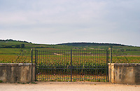 Vineyard. Les Grands Epenots. Pommard, Cote de Beaune, d'Or, Burgundy, France