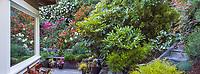 Window reflection overlooking backyard California hillside cottage garden with flowering shrubs perennials and roses - Diana Magor Garden