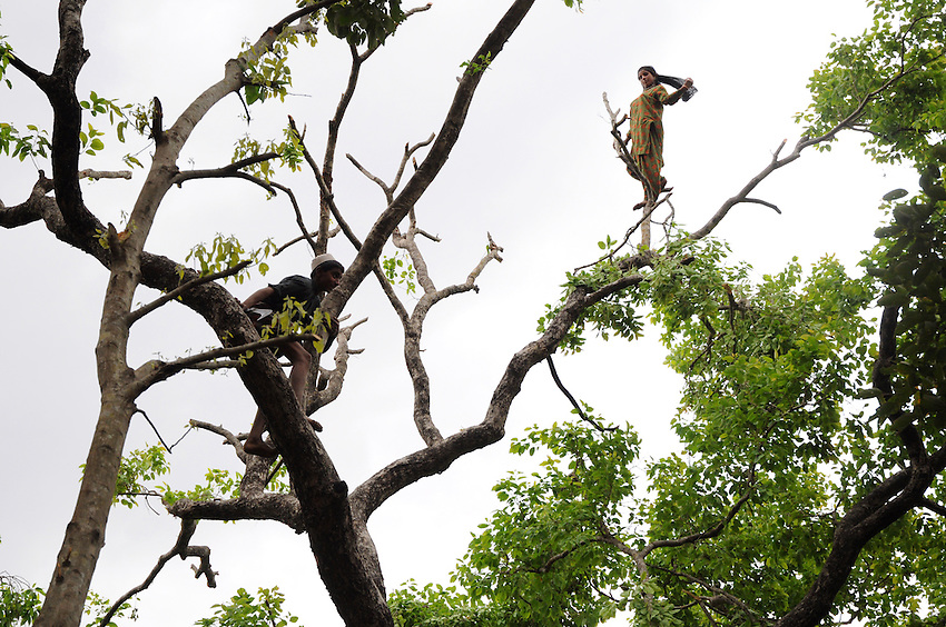 Mariam, up in a tree, with Sharafat below her.