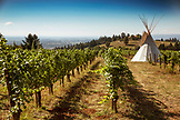 USA, Oregon, Willamette Valley, landscape of a tipi in the vines at The Eyrie Vineyards, Dayton