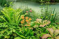 France, Indre-et-Loire (37), Amboise, Jardin et Château du Clos Lucé, jardin autour du basin alimenté par la rivière L'Amasse ou Lamasse avec fougère d'Allemagne (Matteuccia struthiopteris), Primula x bulleesiana,  Rodgersia podophylla...