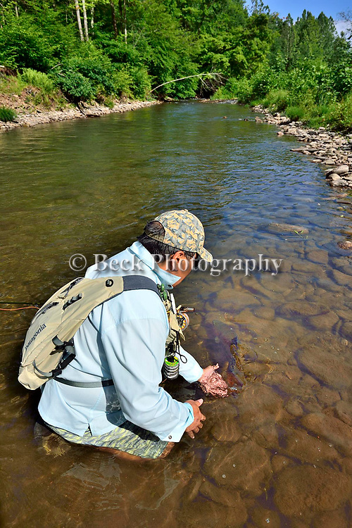 Small stream, rainbow trout, fly fishing, Ron Taniwaki, Pennsylvania