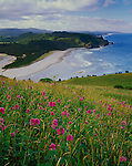 Tillamook County, OR<br /> Hairy checker mallow (Sidalcea hirtipes) on prairie of Cascade Head above the mouth of the Salmon River and the Oregon headlands