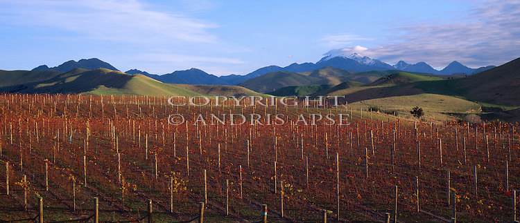 Vineyards in the Awatere Valley. Marlborough Region. New Zealand.