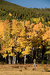 person, photographing, fall, color, aspen, Populus tremuloides, trees, forest, landscape, scenic, autumn, morning, October, Rocky Mountain National Park, Colorado, Rocky Mountains, USA
