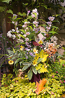 Fall autumn cut flowers in vase, harvested bouquet, including Tricytis toad lilies, Coreopsis Full Moon, dried Hydrangea paniculata Pinky Winky. Coleus Solenostemon Pineapple Queen, Sedum Carl, Salvia officinalis La Crema, Echinacea seed heads, Rudbeckia seedheads, Eupatorium Chocolate