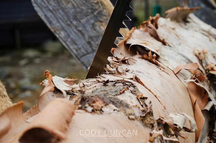 Detail of saw cutting through birch log for firewood at mountain hut, Kungsleden trail, Lappland, Sweden