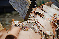 Detail of saw cutting through birch log for firewood at mountain hut, Kungsleden trail, Lappland, Sweden