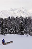 Bjornar Andersens sled dog team on trail near Finger Lake Chkpt 2006 Iditarod Finger Lake Alaska Winter