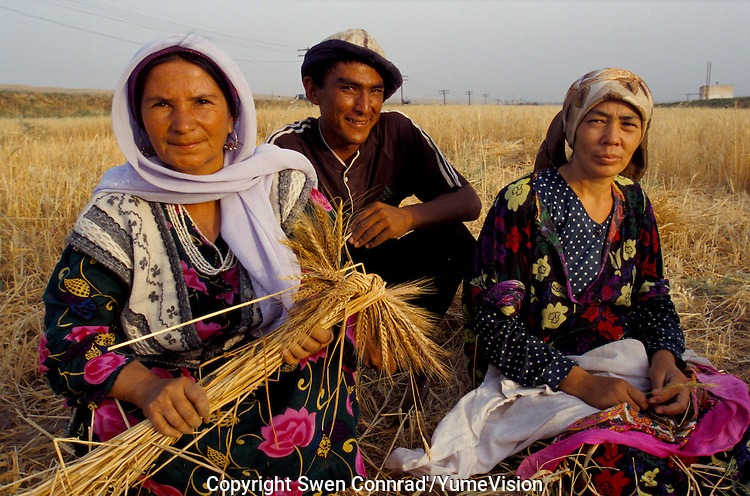 Farmer in a wheat filed the south of Tajikistan