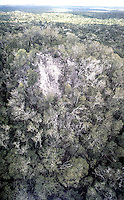 World Civilization:  El Mirador--Jungle covering. Complex visible in horizon.