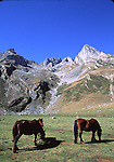 Horses and peaks in Asturias
