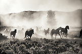 USA, Wyoming, Encampment, Wranglers leading horses to the barn in the early morning, (B&W)
