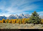 Cottonwoods, Cathedral Group, Mount Winter, South Teton, Middle Teton, Grand Teton, Mount Owen, Teewinot, Grand Teton National Park, Wyoming