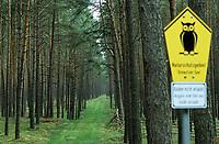 GERMANY, pine forest in nature protected area / DEUTSCHLAND, Kiefernwald im Naturschutzgebiet