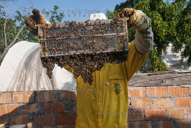 Venezia - Sant'Erasmo. Azienda Miele del Doge. mara La Rosa con Giovanni Pagnin e Marco Vianello producono un miele biologico di gran qualità.