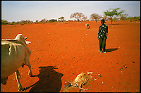 Near 'Bore Hole 11', NE Kenya, March 2006.More than 4 millions people are affected in the region by the worst drought in man's memory. The livestock is decimated and a whole lifestyle threatened.