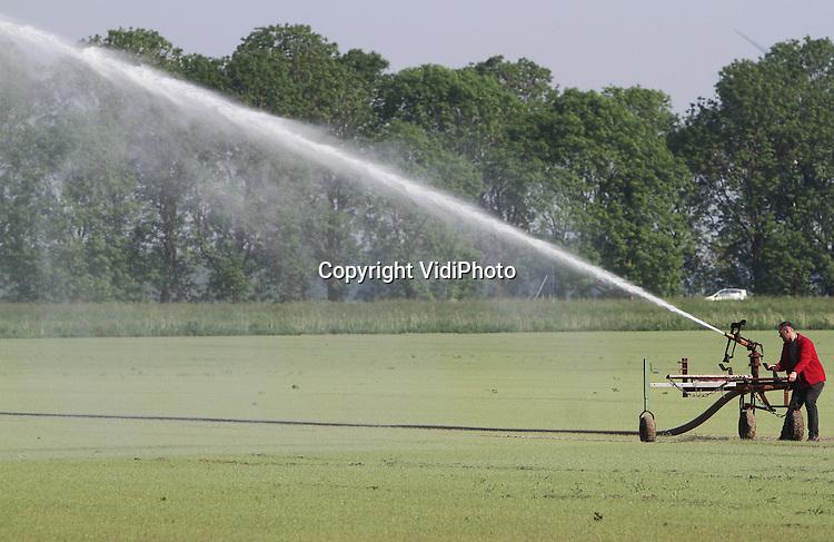 Foto: VidiPhoto..ZEEWOLDE - Het is net een dag droog en nu moet er al beregend worden in de polder. Diverse akkerbouwers en bloementelers in de Flevopolder hebben dinsdag hun beregingsinstallatie al aangezet, zoals hier in Zeewolder. De bovengrond van de 12 ha. zilveruitjes van Primofin Swift BV is inmiddels zo droog, dat de de jonge plantjes en nog niet ontkiemde zaden met wat extra water een duwtje in de rug krijgen. Een medewerker van het bedrijf controleert of de beregeningsinstallatie wel het juiste spoor volgt. Door de koude voorjaarsweken loopt de groei van het gewas achter bij de planning. De zilveruitjes van Primofin zijn bestemd voor de Nederlandse markt en voor export naar het buitenland..