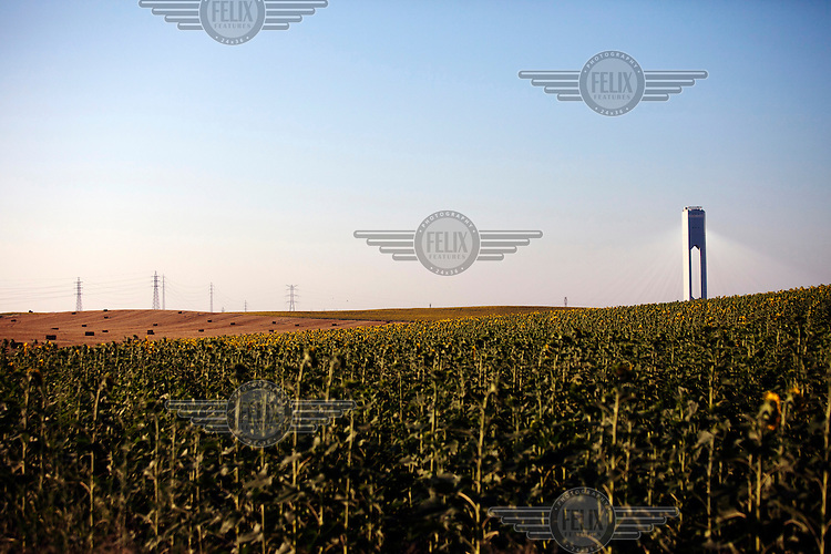 The power tower at the Planta Solar 20 (PS 20) concentrating solar power (CSP) project rises over a field of sunflowers. PS 20 produces 20 megawatts of electrity and its tower, at 160 metres, is the world's tallest.  The plant began electricity production in 2009 and is operated by Abengoa Solar.