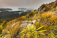 Pastel colours of sunset over Whanganui Inlet on west coast with alpine vegetation, Nelson Region, West Coast, South Island, New Zealand