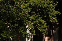 L'Orto botanico di Roma è situato alle pendici del Gianicolo.Attualmente ha un'estensione di 12 ettari. L'Orto ha scopi didattici, di educazione ambientale e di ricerca scientifica. Il giardino ospita attualmente oltre 3000 specie vegetali..The Botanical Gardens in Rome is located on the slopes of Gianicolo..Currently has an area of 12 hectares. The garden has educational purposes, environmental education and scientific research. The garden currently hosts over 3000 plant species...