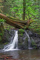WASJ_D199 - USA, Washington, San Juan Islands, Orcas Island, Moran State Park, Rustic Falls and lush forest in spring.