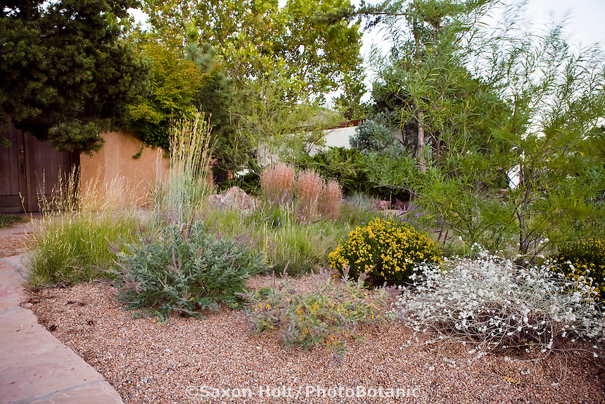 Gravel mulch in drought tolerant front yard meadow garden with gray foliage Eriogonum jamesii and Amorpha, Albuquerque, New Mexico design by Judith Phillps