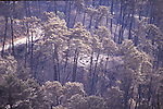 1991 East Bay Hills Fire