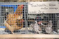 Europe/France/Bourgogne/89/Yonne/Toucy: Volailles sur le marché