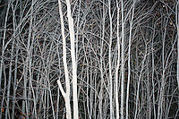 Leafless trees stand next to the road near where Republican presidential candidate and former Florida governor Jeb Bush spoke to a crowd in the barn of Dr. and Mrs. James Betti in Rye, New Hampshire, for former Massachusetts senator Scott Brown's No B.S. BBQ series.