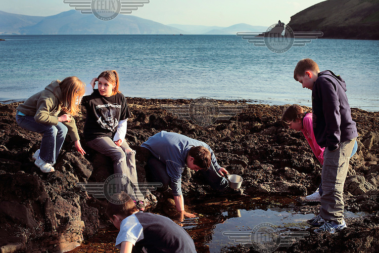 Children catch crabs in Dingle harbour on the west coast of Ireland.