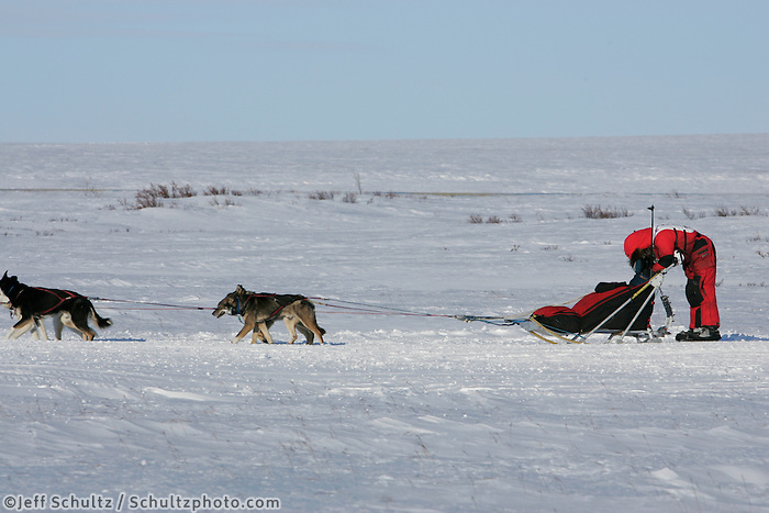 Tuesday March 13, 2007   ----   Lance Mackey, the 2007 Iditarod champion leans over his sled napping about 8 miles from Nome