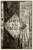 black/white infrared of stupid dog crossing sign in West Virginia