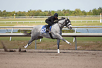 #127Fasig-Tipton Florida Sale,Under Tack Show. Palm Meadows Florida 03-23-2012 Arron Haggart/Eclipse Sportswire.