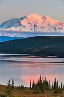 Pink evening light falls on the north face of Denali, North America's tallest mountain, with a reflection in Wonder lake, Denali National Park, Alaska.