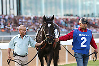 HOT SPRINGS, AR - April 15: Domain's Rap #2 walks in the infield paddock prior to the Oaklawn Handicap at Oaklawn Park on April 15, 2017 in Hot Springs, AR. (Photo by Ciara Bowen/Eclipse Sportswire/Getty Images)