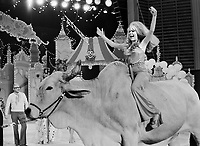 "Charo rides Brahman bull at the ""Circus of the Stars,"" (CBS Special), Santa Monica Civic Auditorium, November, 1976. Ringermaster Jack Cassidy (L) in background. Photo by John G. Zimmerman"