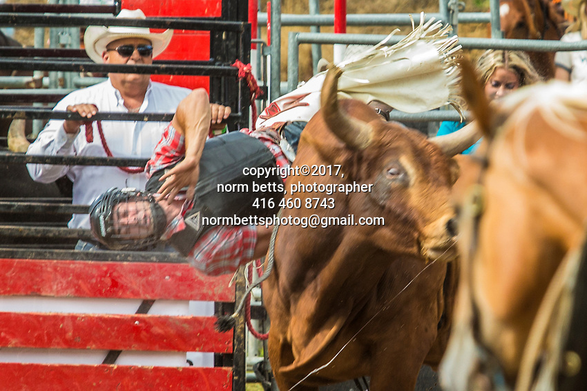 Tweed, Ontario, Canada --- 05-6July'17<br /> The RAM Rodeo at the Tweed Stampede, Tweed, Ontario, Canada<br /> <br /> <br /> photos by Norm Betts<br /> normbetts@canadianphotographer.com<br /> &copy;2017, Norm Betts, photographer<br /> 416 460 8743