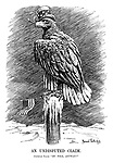 """An Undisputed Claim. American Eagle. """"My Pole, anyway!"""""""