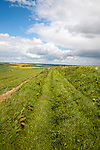 Grass track crossing chalk landscape of the Marlborough Downs, near East Kennet, Wiltshire, England