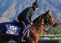 Vorda, trained by Philippe Sogorb, trains for the Breeders' Cup Juvenile Fillies Turf at Santa Anita Park in Arcadia, California on October 30, 2013.