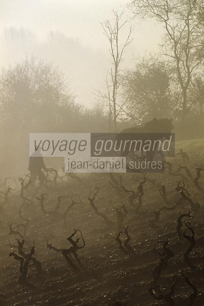 Europe/France/Pays de la Loire/Maine-et-Loire/Environ d'Angers : AOC Anjou Savennières  (Coulée de Serrant) - Labour des vignes