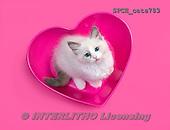 Xavier, ANIMALS, REALISTISCHE TIERE, ANIMALES REALISTICOS, cats, photos+++++,SPCHCATS783,#a#