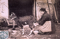 """Europe/France/Midi-Pyrénées/46/Lot/Env de Rocamadour: La traite des chèvres sur une ancienne carte postale de la collection du centre d'interprétation du Causse de Rocamadour """"Ferme de Justine"""" AOC Rocamadour"""