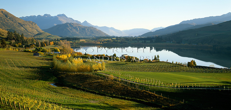 Vineyard at Lake Hayes. Otago Region. New Zealand.